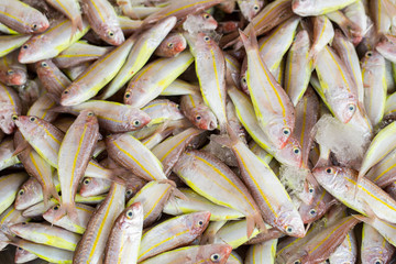 fish in the fresh market