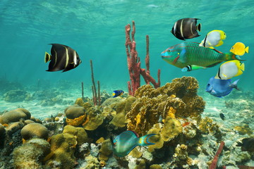 Corals and colorful tropical fish under the water