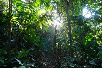 Jungle path through lush vegetation