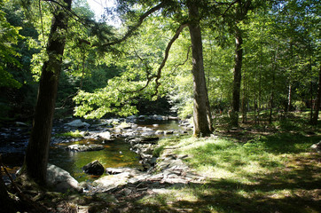 Peaceful brook or small river surrounded by green trees on a sunny summer day in rural area of the Poconos, in PA, United States.