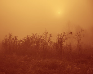 Rural landscape