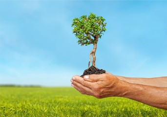 Tree in Hands, Growth, Environment.