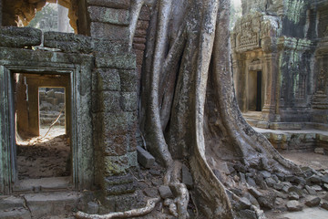 Jungle and giant tree rootsd cover parts of the Ta Prohm temple complex.nearSiem Reap,Cambodia