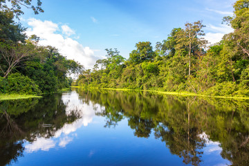 Amazon rain forest perfectly reflected in a small river near Iquitos, Peru