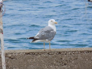 Seagull on a concrete wall