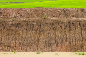 Paddy soil water erosion.