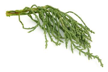 Samphire, salicornia