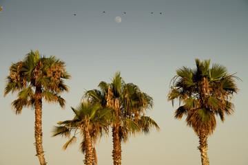 palmboom met parkieten