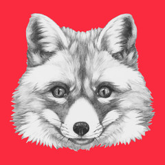 Hand drawn portrait of Fox with glasses. Vector isolated elements.