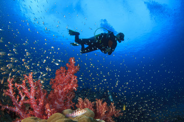Scuba Diving on coral reef in ocean