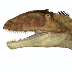 Carcharodontosaurus Head - Carcharodontosaurus was a carnivorous theropod dinosaur that lived in Sahara, Africa during the Cretaceous Period.