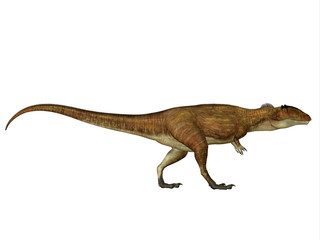 Carcharodontosaurus Side Profile - Carcharodontosaurus was a carnivorous theropod dinosaur that lived in Sahara, Africa during the Cretaceous Period.