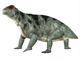 Moschops Side Profile - Moschops was a primeval herbivorous dinosaur that lived in South Africa in the Permian Period.