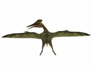 Pterodactylus Reptile Dinosaur - Pterodactylus was a flying carnivorous reptile that lived in the Jurassic Period of Bavaria, Germany.