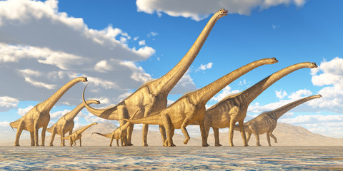 Sauroposeidon Herd Traveling - A herd of Sauroposeidon dinosaurs travel together in search of water and vegetation to eat.