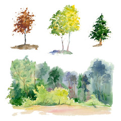 Watercolor plants (forest, grove, tree).