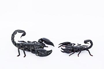 2 Black scorpions