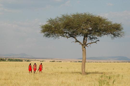 Masai people in traditional costumes walks in savannah