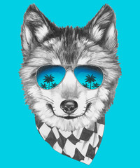 Prtrait of Wolf with sunglasses and scarf. Vector isolated elements