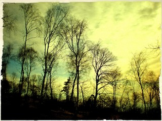 Bare trees in yellow light of evening