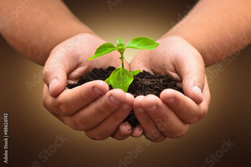 Wall mural Green plant in a child hands