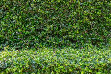 Tiny green leaves texture background.