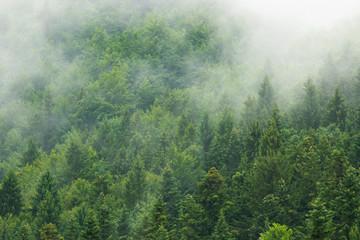 Garden Poster Forest Misty forest