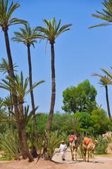 Afrique, Maroc, Marakech, chameaux, Tourisme