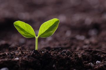 新緑の新芽