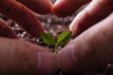 新芽と人間の手
