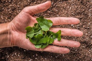 植物の葉を持っている手
