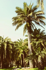 Tropical forest with palms