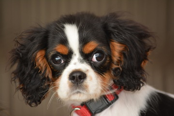 cavalier big and beautiful singles What: they say friendship isn't one big thing, it's a million little things.