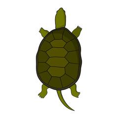 Hand drawn tortoise illustration in cartoon style