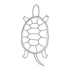 Hand drawn tortoise illustration in cartoon style