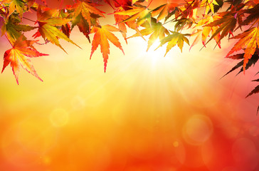 Autumn background with red leaves and sunshine