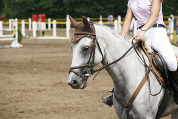 Face of a beautiful purebred racehorse on a jumping competition