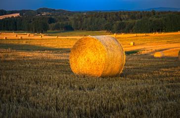 Fotoväggar - Abendsonne auf dem Feld