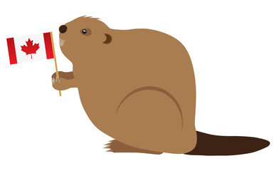 Canadian Beaver Color Vector Illustration