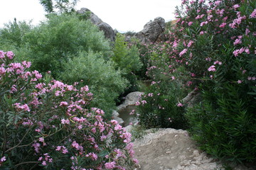 bitki ve doğa resimleri
