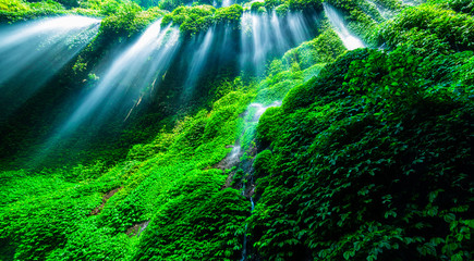Wall Mural - Beautiful waterfall in the green forest