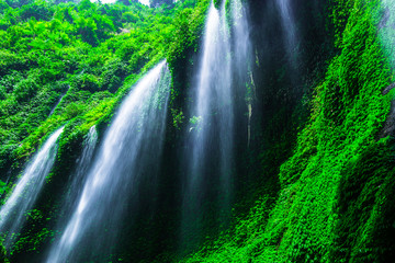 Wall Mural - Madakaripura Waterfall in Bromo Tenger Semeru National Park