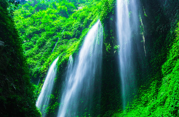 Wall Mural - Waterfall in deep forest