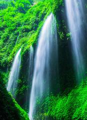 Wall Mural - Madakaripura Waterfall