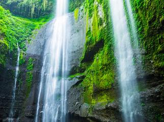 Wall Mural - Madakaripura Waterfall in Indonesia
