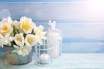 White daffodils and tulips  flowers in bucket