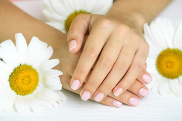Woman hands with french manicure and chamomile on table close-up