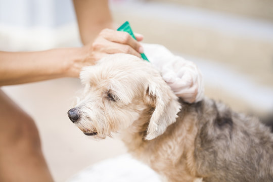 tick and flea prevention for a dog