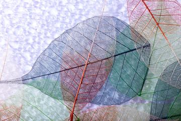 Keuken foto achterwand Decoratief nervenblad Abstract colorful skeleton leaves background