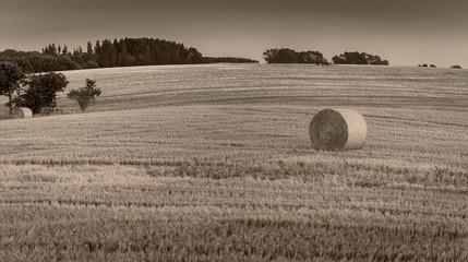 Fotoväggar - Landschaft im Sommer, landwirtschaftliche Fläche